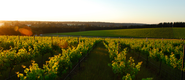Link to CHAPMAN BROOK VINEYARD
